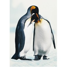 Pinguins-01