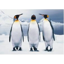 Pinguins-02