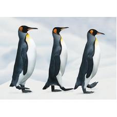 Pinguins-03